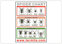 spider-id-chart